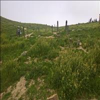 ترکمن صحرا  و خالد نبی