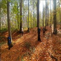 جنگل راش مرسی سی
