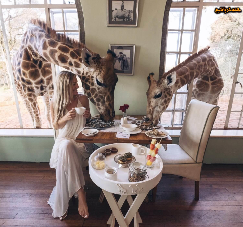 کنیا زرافه همسفر باشیم