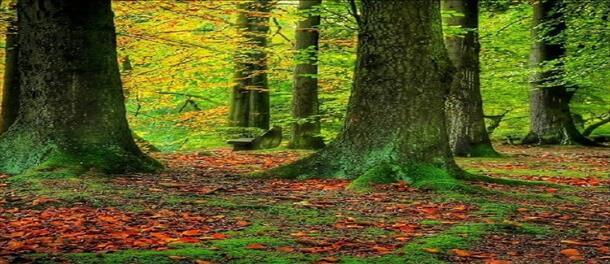 جنگل هیرکانی ۴.۵ روزه